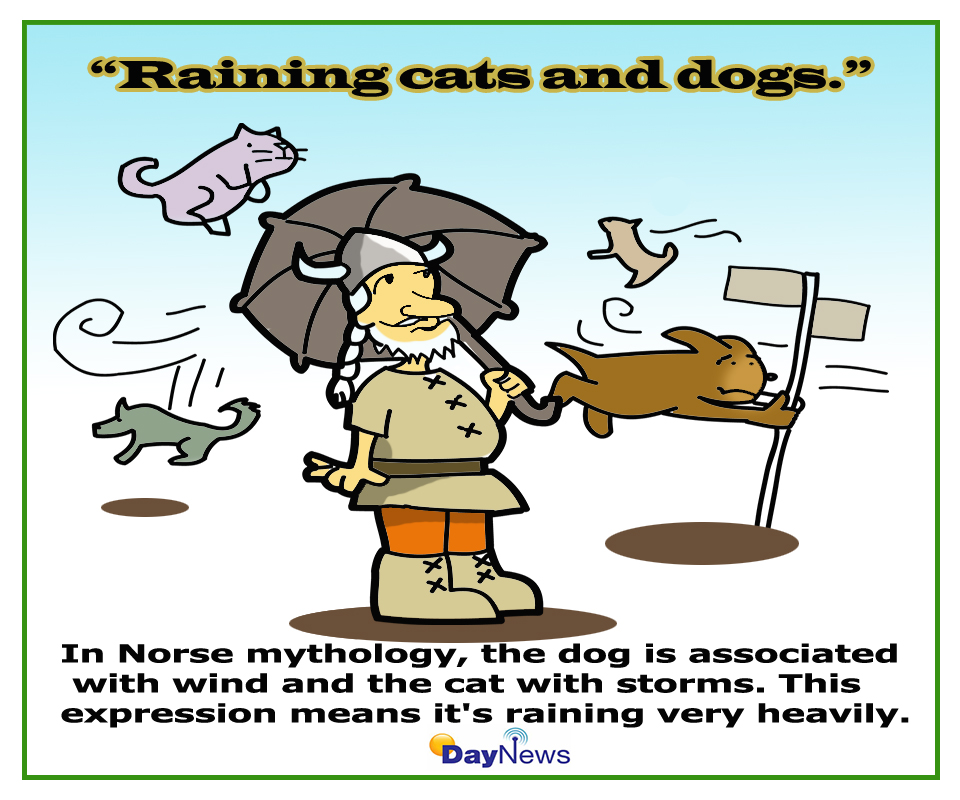 Rain Cats And Dogs In Spanish