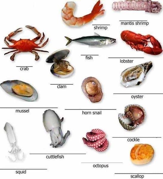 Vocabulary gli animali del mare il dell inglese