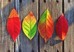 leaves-1051937_1280