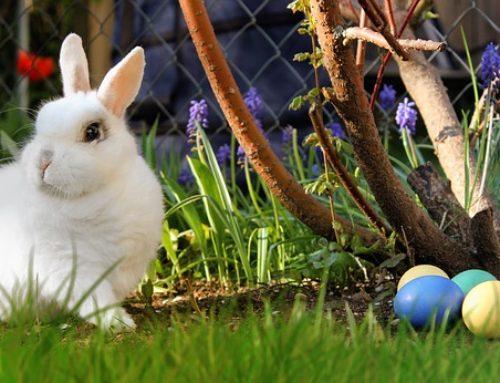 Canzoncina di Easter Bunny