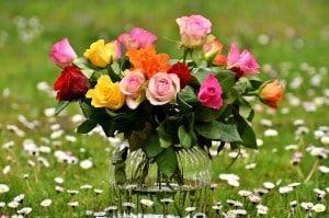 roses-2230465_640