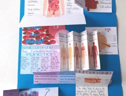 Lapbook in inglese sul corpo umano