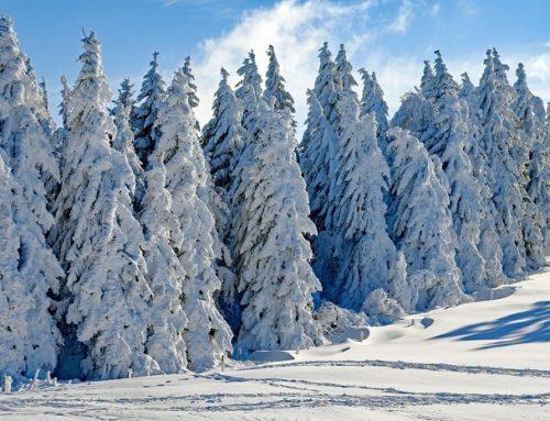 3 Libri in inglese da leggere in inverno