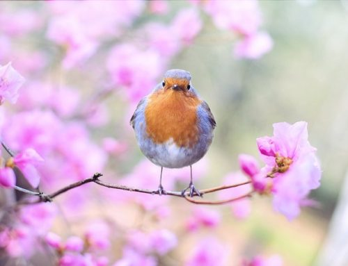 Libri in inglese sulla primavera