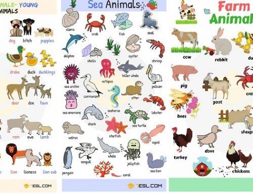 Nomi degli animali: poster da stampare