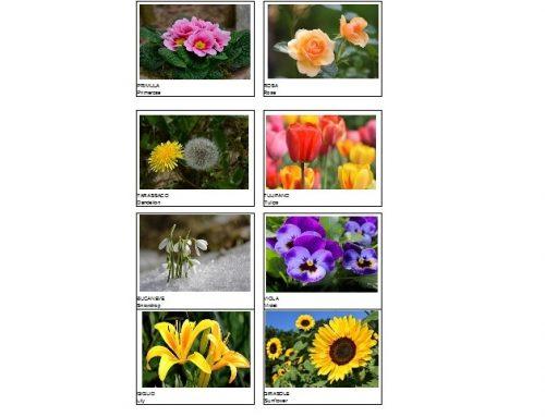 Flashcards dei fiori da stampare