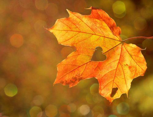 Libri sull'autunno da leggere in in inglese